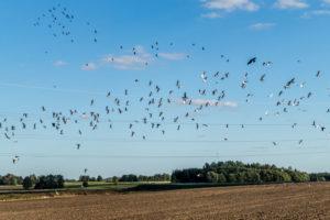 paesaggio uccelli